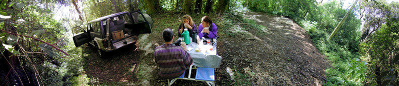 Rainforest Picnic